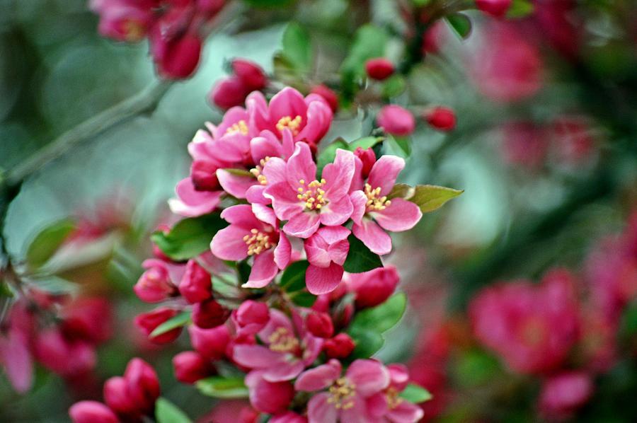Spring Photograph - Spring Bokeh by David Earl Johnson