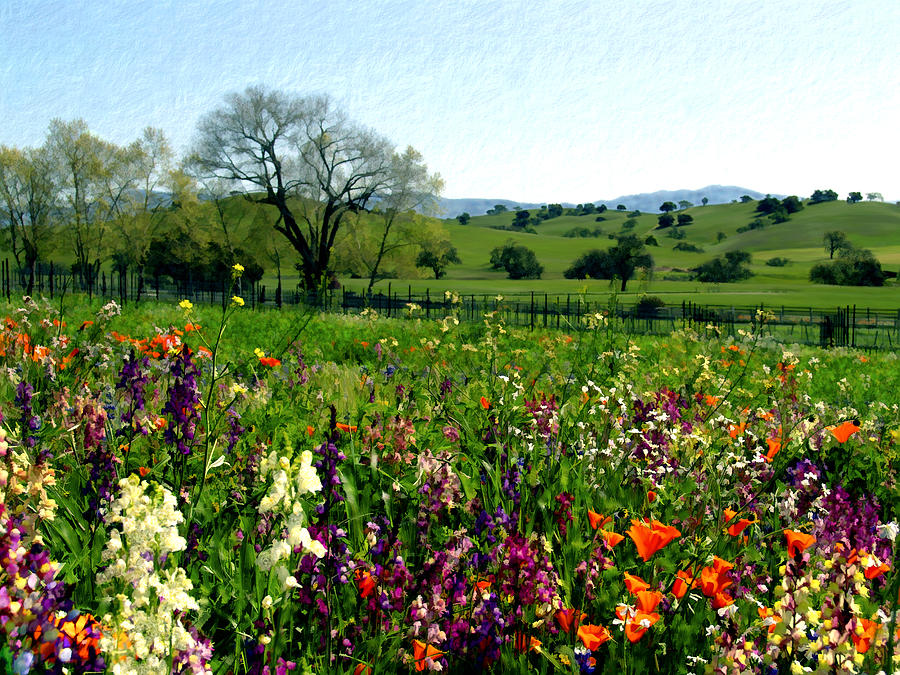 Flowers Photograph - Spring Bouquet At Rusack Vineyards by Kurt Van Wagner