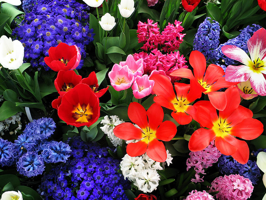 Spring Bouquet by Sandy Scharmer