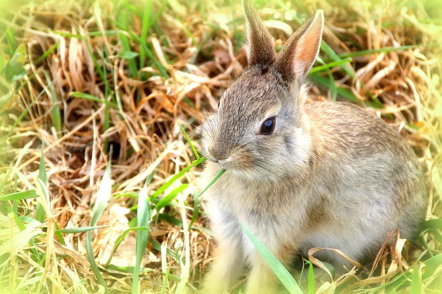 Spring Photograph - Spring Bunny by Diane Alexander