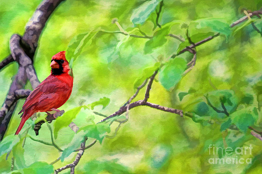 America Photograph - Spring Cardinal by Darren Fisher