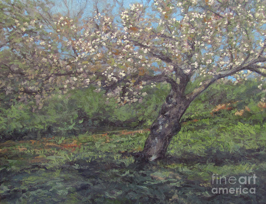 Cherry Blossoms Painting - Spring Cherry Blossoms by Gregory Arnett