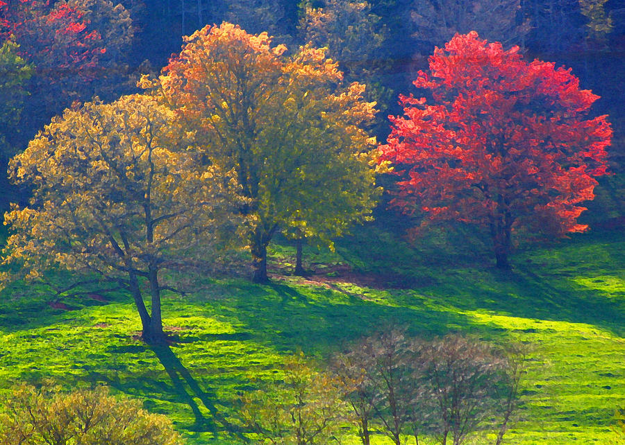 Trees Photograph - Spring Color Just Down The Road by Alan Olansky