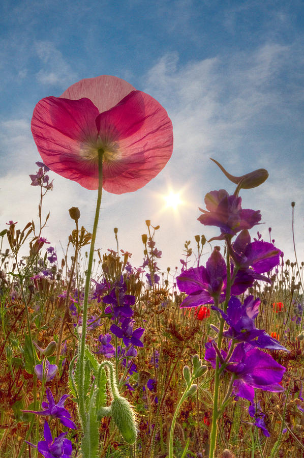 Appalachia Photograph - Spring   by Debra and Dave Vanderlaan