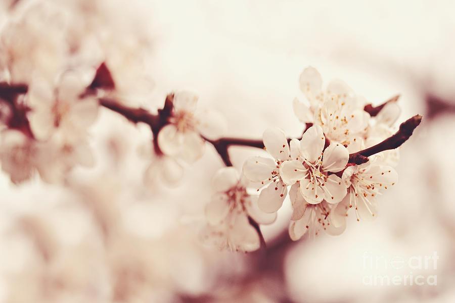 Spring Photograph - Spring by Diana Kraleva