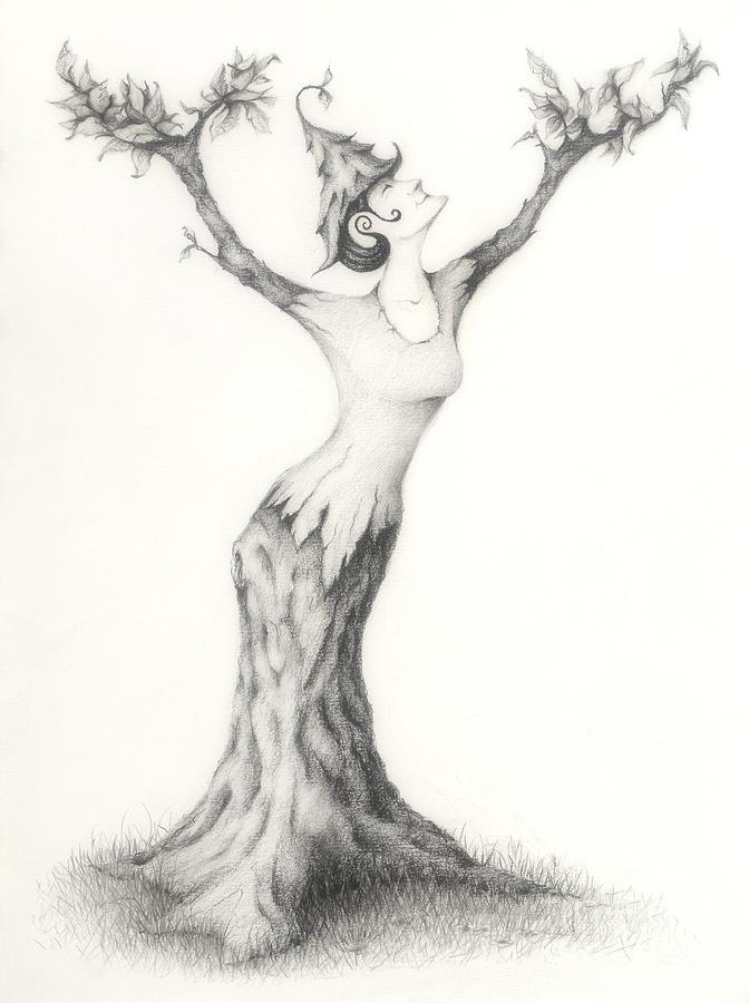 Tree Drawing - Spring by Diane Smith