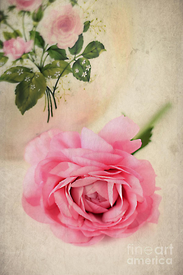Aged Photograph - Spring Elegance by Darren Fisher