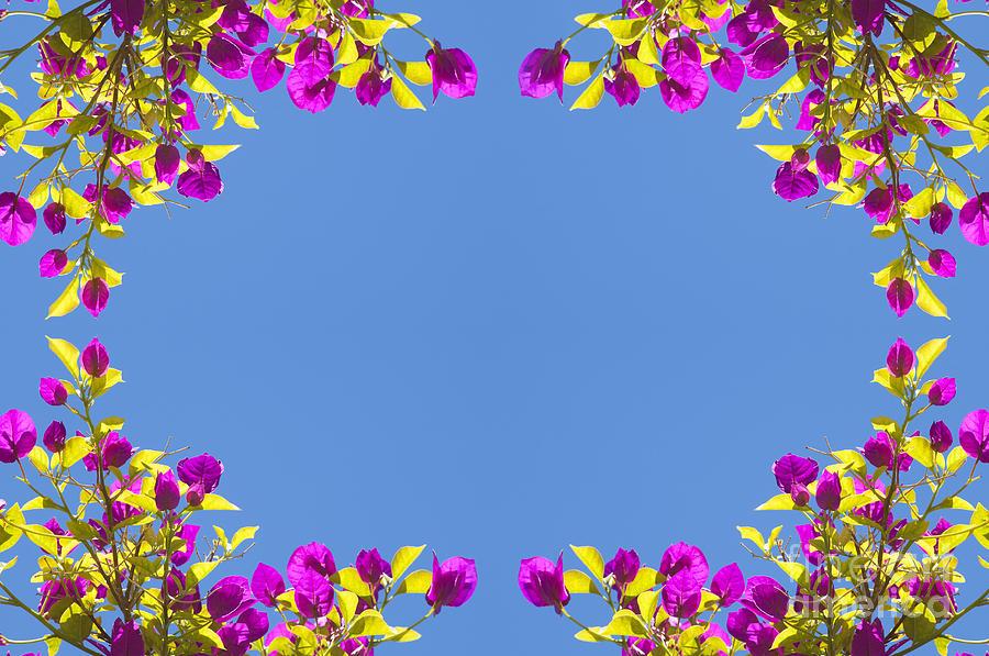 Spring Flower Frame Photograph