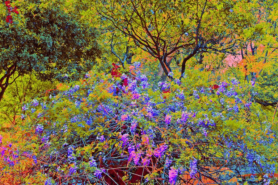 Spring flowers at zilker botanical gardens in austin texas flowers photograph spring flowers at zilker botanical gardens in austin texas by bill blackmon mightylinksfo