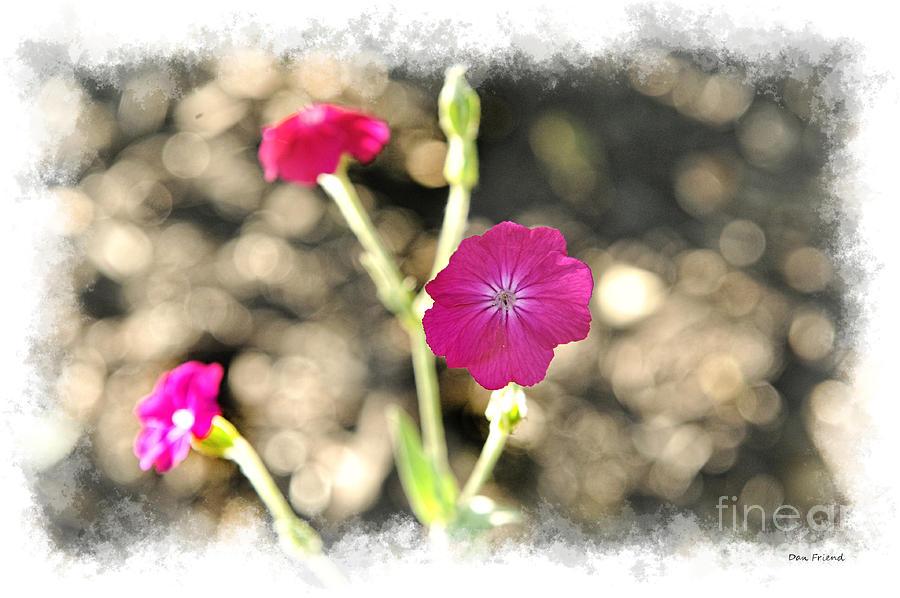Flowers Photograph - Spring flowers by Dan Friend