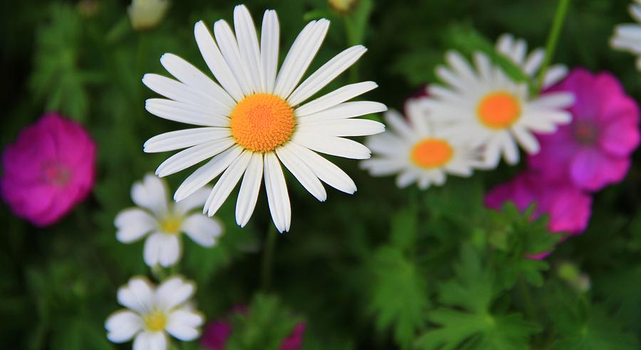 Spring Flowers Photograph - Spring Flowers by Dan Sproul