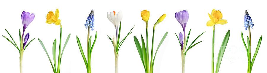 Flowers Photograph - Spring Flowers  by Elena Elisseeva
