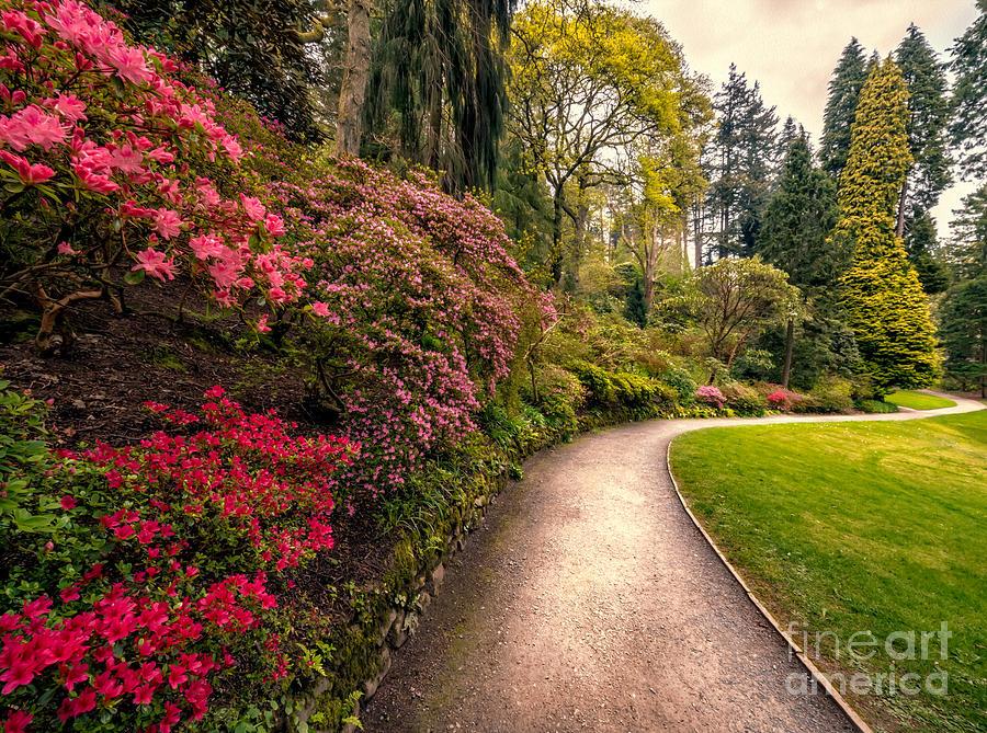 Cymru Photograph - Spring Footpath by Adrian Evans