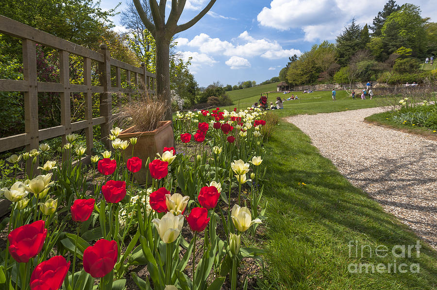 East Sussex Photograph - Spring Garden by Donald Davis
