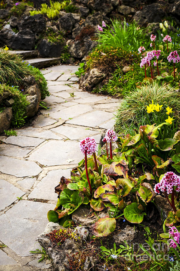 Garden Photograph - Spring Garden by Elena Elisseeva