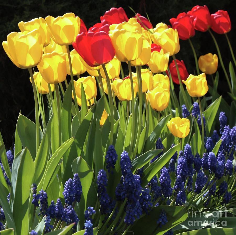 Spring Garden Photograph - Spring Garden Sunshine Square by Carol Groenen