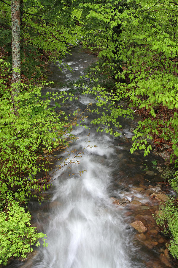 Spring Photograph - Spring Green Framing Bubble Brook  by Juergen Roth