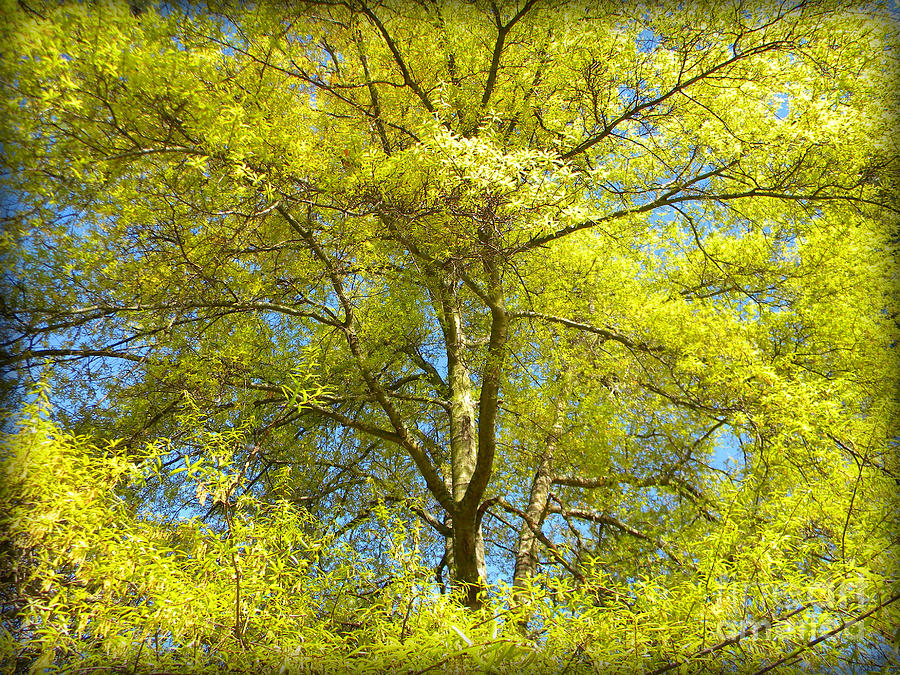 Tree Photograph - Spring Greening by Lorraine Heath
