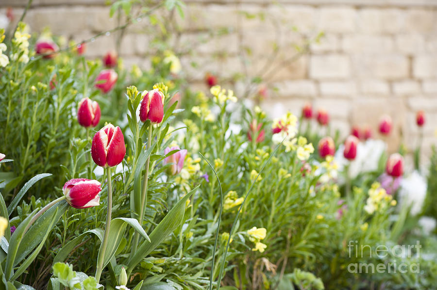 April Photograph - Spring Has Sprung by Anne Gilbert