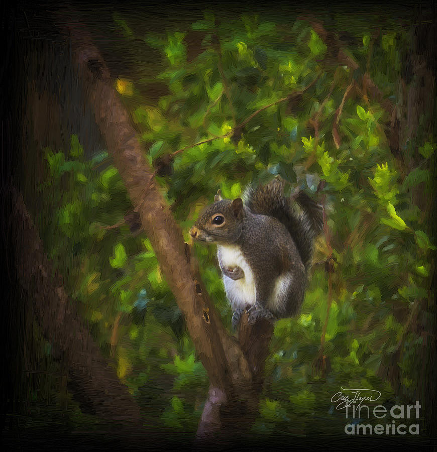 Wildlife Photograph - Spring Has Sprung by Cris Hayes