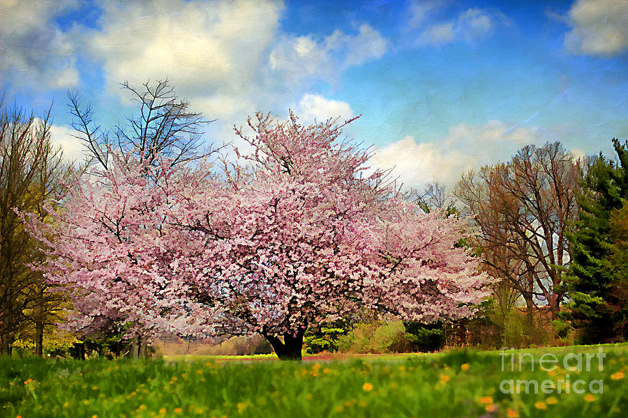 Agriculture Photograph - Spring In Kentucky by Darren Fisher