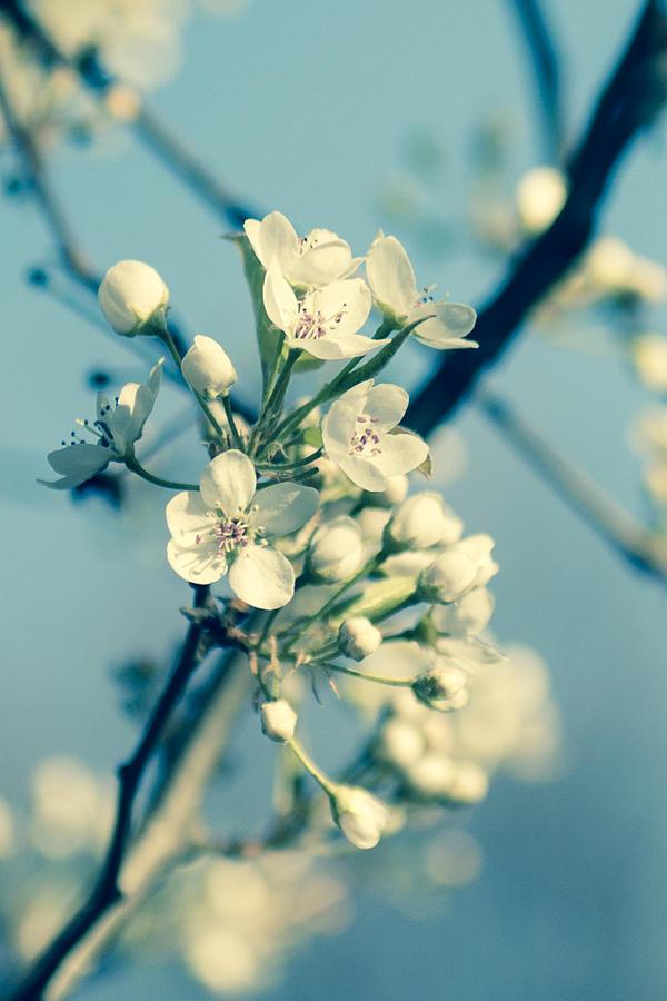 Spring In Nj Photograph