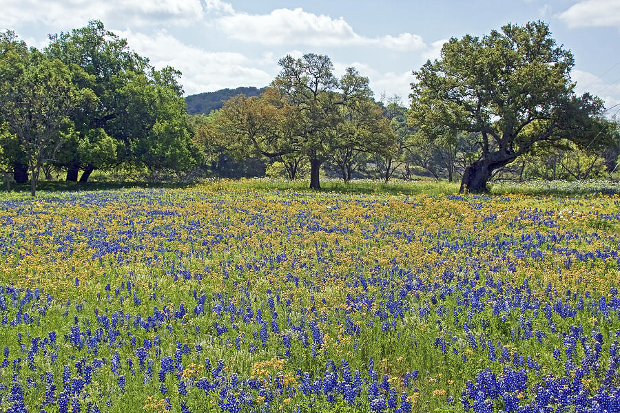 Spring Texas Hill Country Photograph Gary Holmes