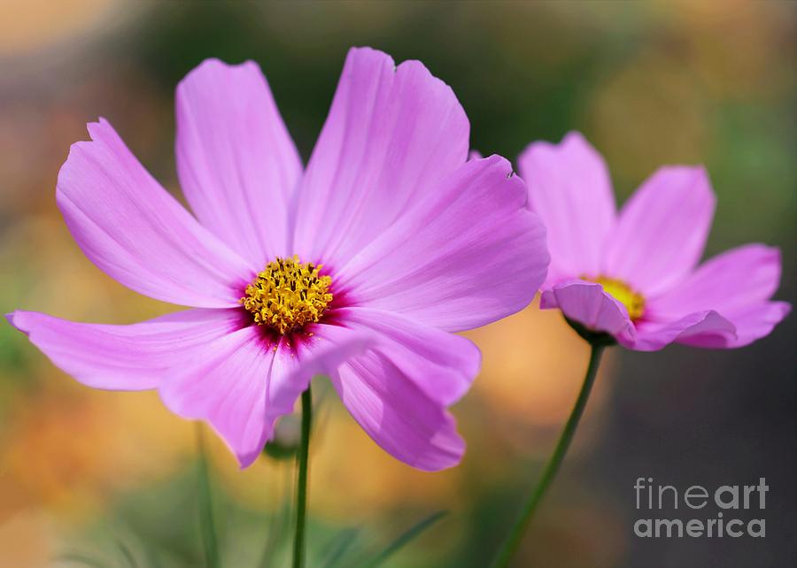 Flowers Photograph - Spring Is Here by Sabrina L Ryan