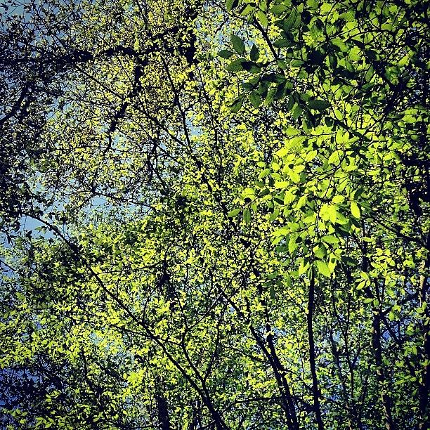 Nature Photograph - Spring Leaves  by Nic Squirrell