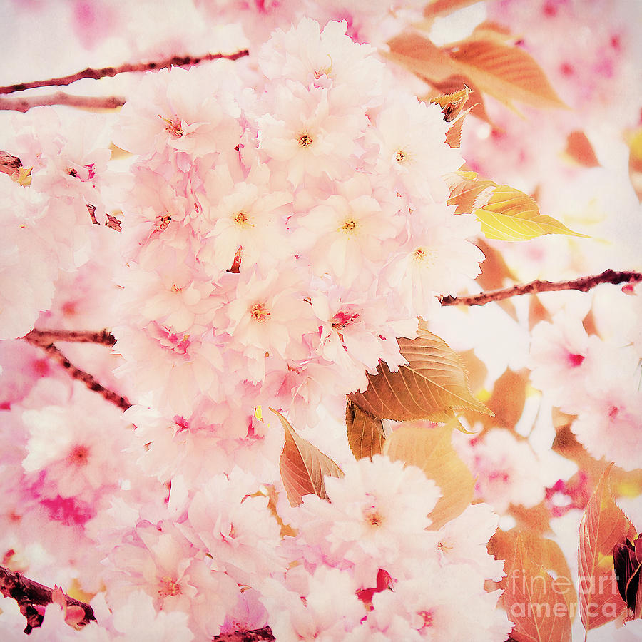 Cherry Blossoms Photograph - Spring Love by Angela Doelling AD DESIGN Photo and PhotoArt