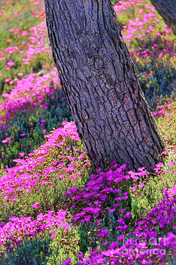 Spring Photograph - Spring Meadow by Mariola Bitner