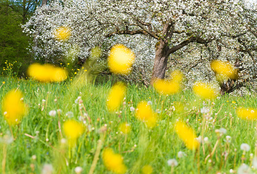 Spring Meadow With Yellow Flowers Photograph