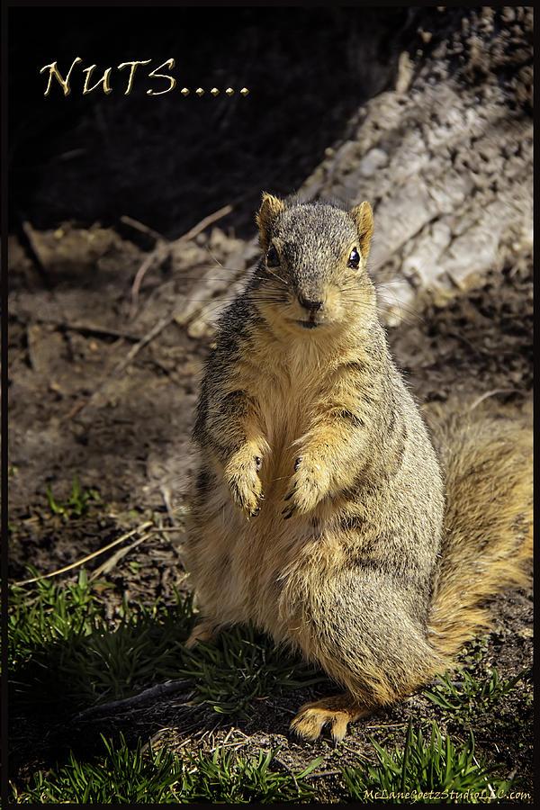 Usa Photograph - Spring Nature At Spnc by LeeAnn McLaneGoetz McLaneGoetzStudioLLCcom