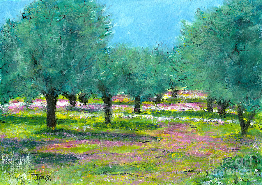 Spring Olive Grove Greece by Jackie Sherwood
