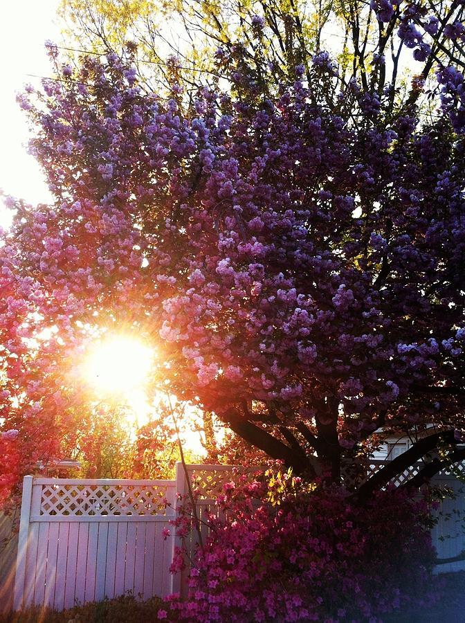 Spring Photograph - Spring Paradise by Toni Martsoukos
