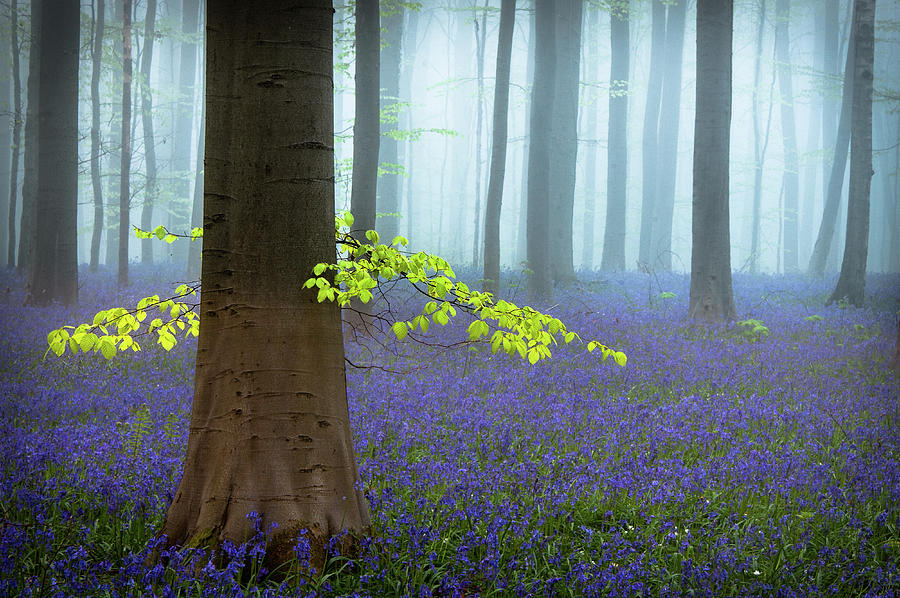 Bluebells Photograph - Spring........... by Piet Haaksma