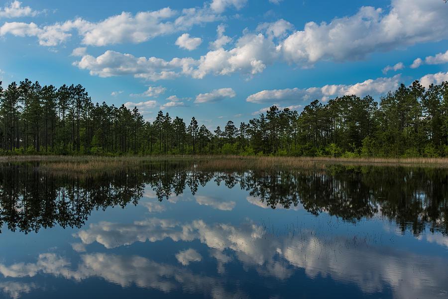 Pond Photograph - Spring Pond by Jim Neal