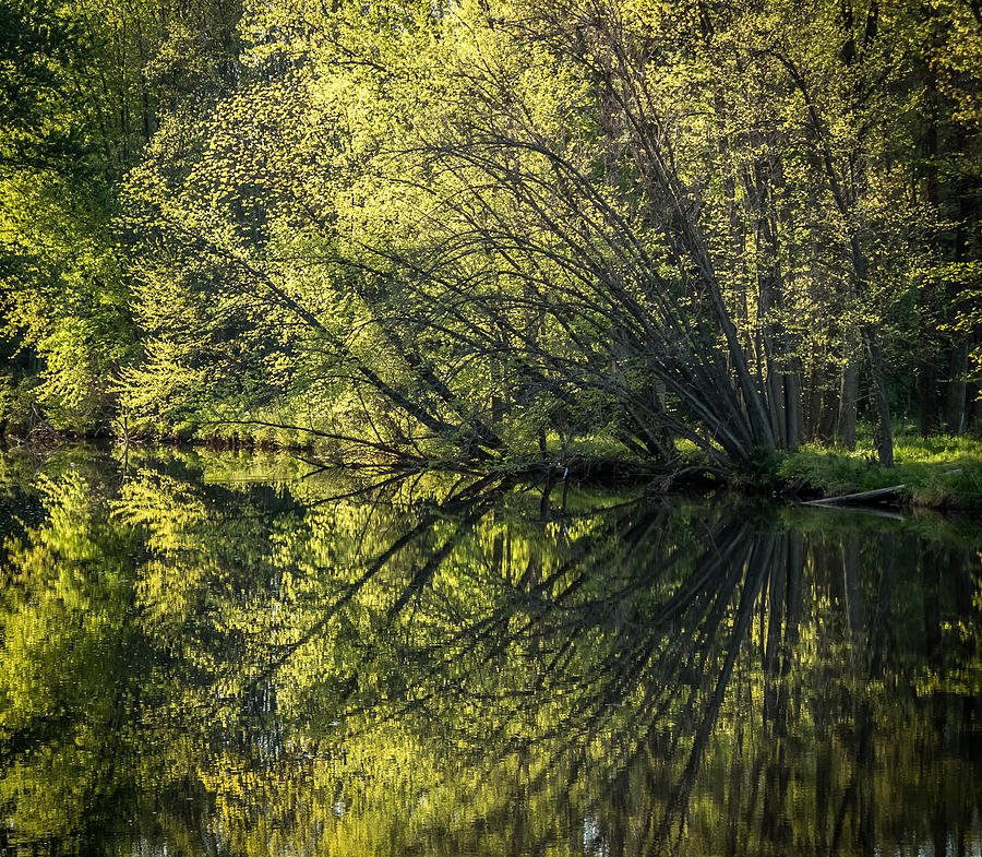 Spring Photograph - Spring Reflections by Jeffrey Frazier