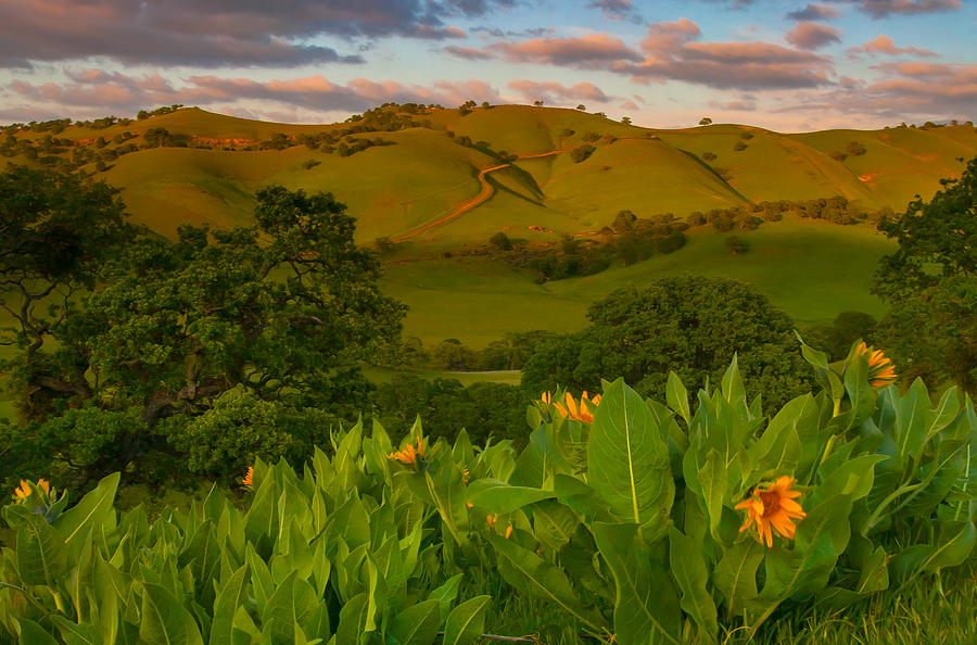 Landscape Photograph - Spring Scene At Round Valley by Marc Crumpler