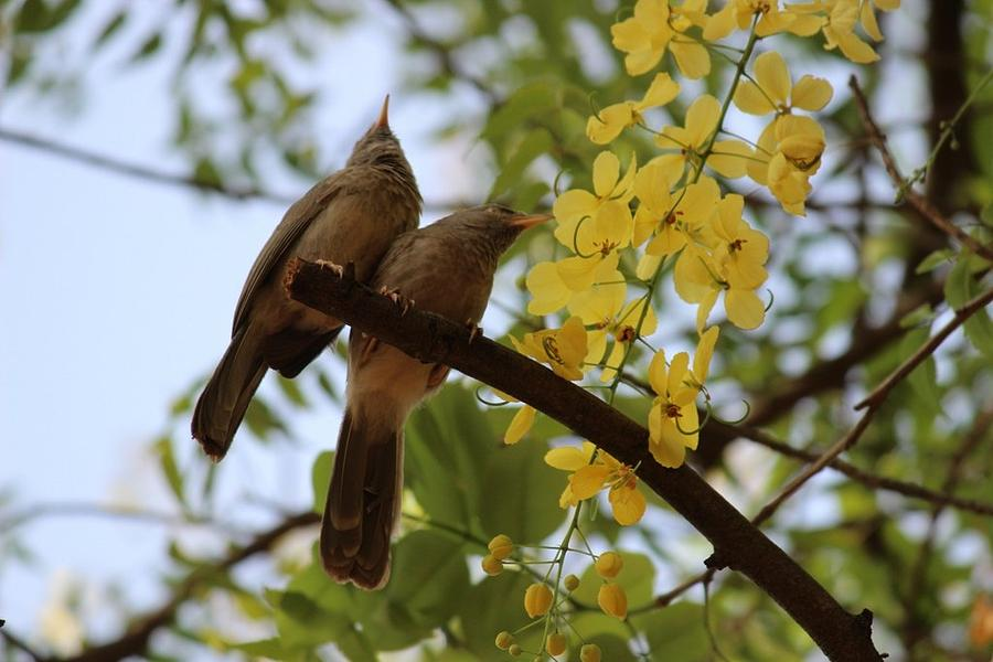 Bird Photograph - Spring Season by Sneh Jariwala