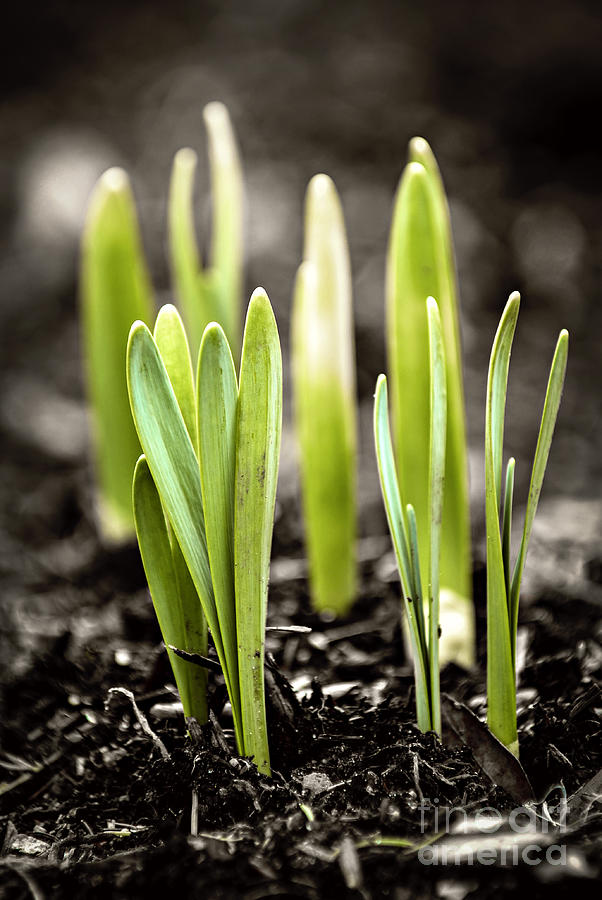 Spring Photograph - Spring Shoots by Elena Elisseeva