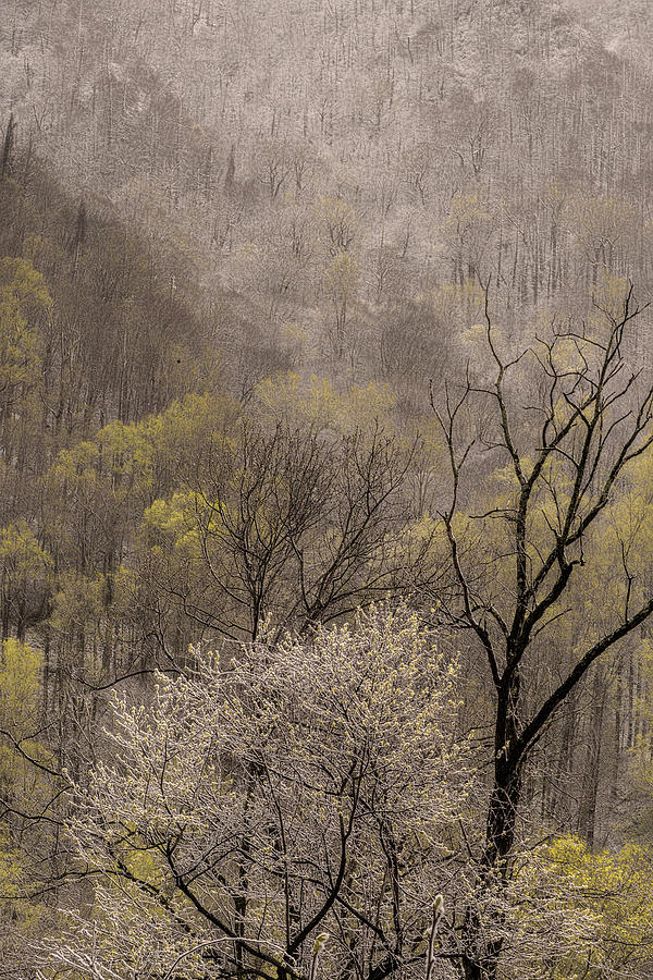 Snow Photograph - Spring Snow by Tom  Reed
