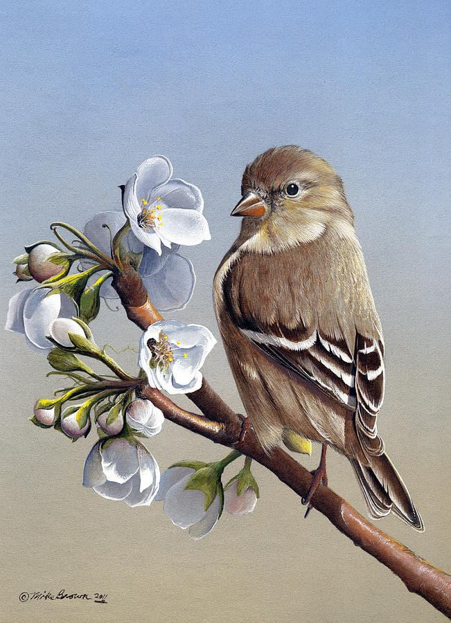 American Goldfinch Painting - Spring Splendor by Mike Brown
