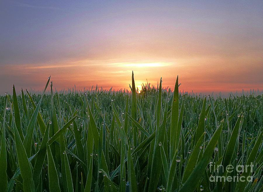 Spring Photograph - Spring Sunrise by AmaS Art
