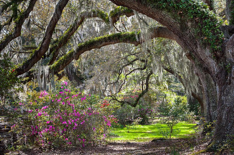 Spring Sunshine Southern Plantation Scenic Landscape