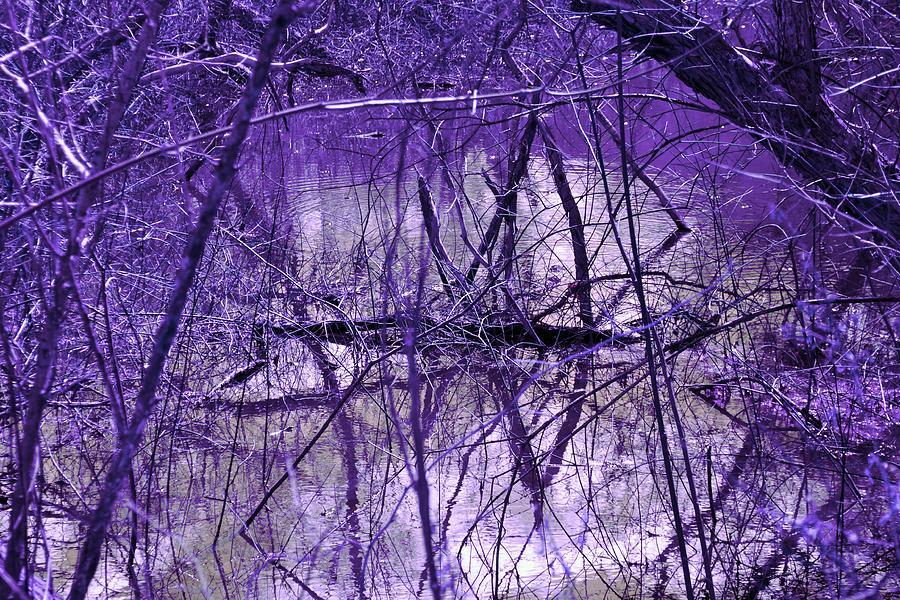 Seasonal Photograph - Spring Swamp by Michael Sokalski