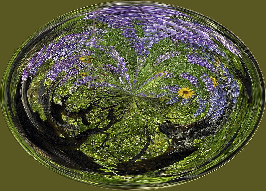 Flower Photograph - Spring Swirl by Jean Noren
