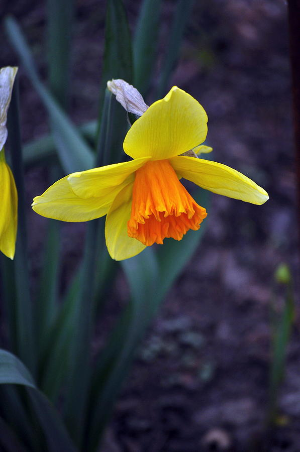 Flower Photograph - Spring Time by Larry Jones