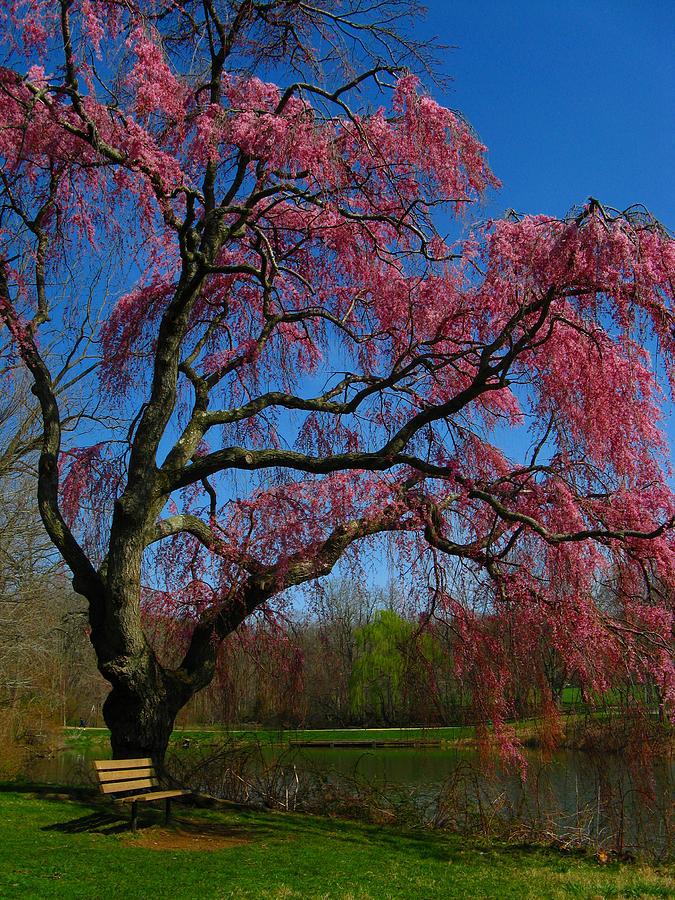 Spring Photograph - Spring Time by Raymond Salani III