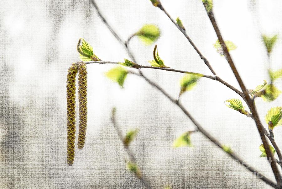 Spring Photograph - Spring Tree Branch by Elena Elisseeva